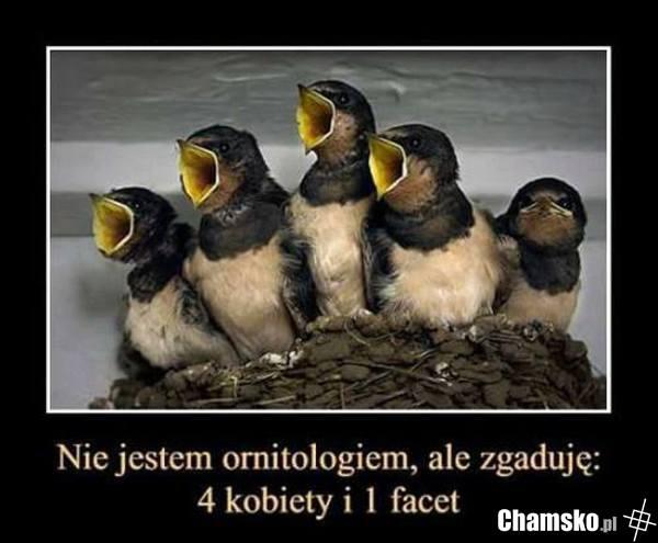 0_1_78614_Piskleta_przez_pluszowymis.jpg